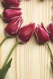Fondo astratto con i tulipani Immagine Stock Libera da Diritti