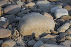 Fondo astratto con il grande e piccolo mare rotondo grigio asciutto reeble immagini stock