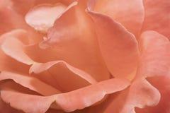 Fondo astratto da un fiore della rosa Immagini Stock
