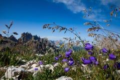 Fondo astratto dei fiori alpini Immagine Stock Libera da Diritti