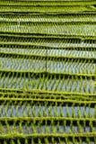 Fondo astratto dei terrazzi del riso, Bali Fotografia Stock Libera da Diritti