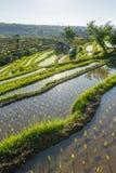 Fondo astratto dei terrazzi del riso, Bali Immagine Stock Libera da Diritti