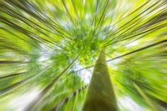 Fondo astratto del fil defocusing di effetto radiale dello zoom della foresta Fotografia Stock