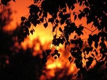 Fondo astratto del fogliame, bello ramo di albero, luce calda del sole fotografia stock