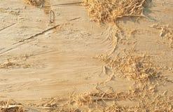 Fondo astratto del modello di struttura di legno dell'albero naturale Legname con i trucioli fotografie stock