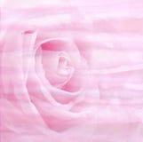 Fondo astratto dell'acquerello con la rosa di rosa su struttura di carta Fotografie Stock