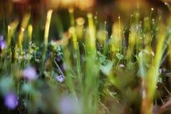 Fondo astratto dell'erba verde, fuoco molle, giorno soleggiato, PS fresco Fotografie Stock Libere da Diritti