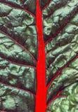 Fondo astratto della foglia verde con le vene rosse Immagini Stock Libere da Diritti