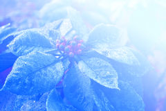 Fondo astratto della luce morbida del fiore Fotografia Stock Libera da Diritti