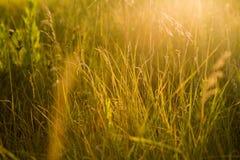 Fondo astratto della natura di estate o della primavera con erba in me Immagini Stock Libere da Diritti
