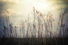 Fondo astratto della natura in fiori selvaggi di stile d'annata Fotografia Stock