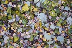 Fondo astratto delle foglie cadute Fotografie Stock