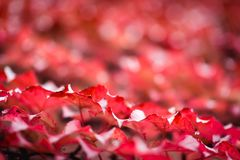 Fondo astratto di autunno di caduta con le foglie di autunno Immagine Stock