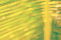 Fondo astratto di foglia di palma tropicale della sfuocatura Fotografia Stock Libera da Diritti
