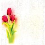 Fondo astratto di lerciume con i tulipani Immagine Stock