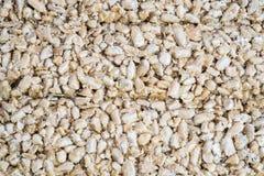 Fondo astratto di struttura dei semi di girasole Immagine Stock Libera da Diritti