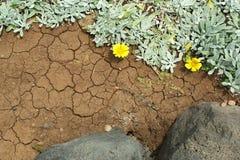 Fondo astratto di terra vulcanica e della pianta succelent Immagine Stock