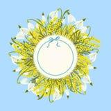 Fondo astratto floreale del modello della primavera con il fiore dell'acacia della mimosa e di bucaneve e posto per testo Immagini Stock Libere da Diritti