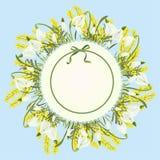 Fondo astratto floreale del modello della primavera con il fiore dell'acacia della mimosa e di bucaneve e posto per testo Fotografia Stock Libera da Diritti