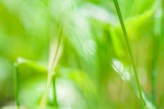 Fondo astratto vago con erba verde fotografia stock libera da diritti