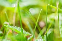 Fondo astratto vago con erba verde immagini stock libere da diritti