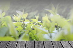 Fondo astratto verde della natura della sfuocatura Fotografia Stock Libera da Diritti