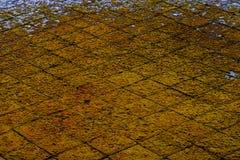 Fondo astratto verde giallo di lerciume fotografia stock