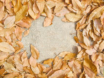 Fondo autunnale astratto con le foglie asciutte Saluto di stagione di caduta Immagine Stock
