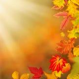 Fondo autunnale variopinto con le foglie Immagine Stock