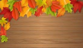 Fondo - autunno - foglie - fogliame Immagini Stock Libere da Diritti