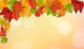 Fondo - autunno - foglie - fogliame Fotografia Stock
