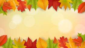 Fondo - autunno - foglie - fogliame Immagine Stock Libera da Diritti