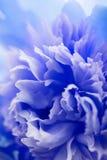 Fondo azul abstracto de la flor Fotografía de archivo