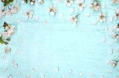 Fondo azul claro de madera adornado con las flores de la cereza Fotos de archivo libres de regalías