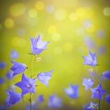 Fondo azul de flores de campana foto de archivo