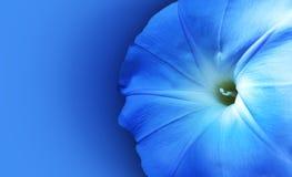 Fondo azul de la flor fotografía de archivo libre de regalías