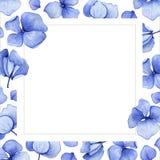 Fondo azul de la flor de la hortensia de la acuarela Imagen de archivo libre de regalías