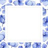 Fondo azul de la flor de la hortensia de la acuarela Imágenes de archivo libres de regalías