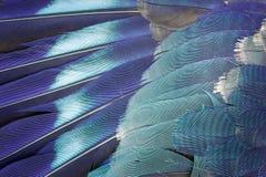 Fondo azul de la pluma Imágenes de archivo libres de regalías