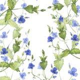 Fondo azul de las flores del bosque Ejemplo dibujado mano de la acuarela ilustración del vector