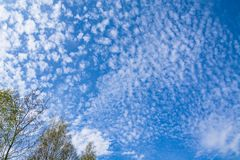 Fondo azul del cielo de la primavera con los tops de árboles en ángulo del tiro Imagen de archivo libre de regalías