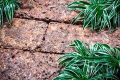 Fondo bagnato del pavimento della laterite con la pianta di ragno Fotografia Stock Libera da Diritti