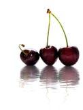 Fondo bagnato di Cherry Dreams Fotografia Stock Libera da Diritti