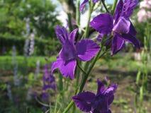 Fondo bajo la forma de flores verdes y violetas jovenes Fotos de archivo libres de regalías