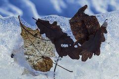 Fondo: banchisa galleggiante con le foglie bloccate dal ghiaccio Fotografie Stock Libere da Diritti