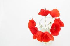 Fondo bianco con il posto vuoto per l'iscrizione con popp rosso Fotografia Stock Libera da Diritti