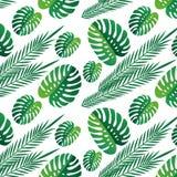 Fondo bianco del modello senza cuciture tropicale delle foglie verdi Carta da parati esotica Fogli tropicali natura, stampa del f illustrazione vettoriale