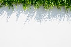 Fondo bianco della sfuocatura con la siluetta del fiore fotografia stock libera da diritti