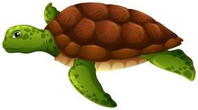Fondo bianco della tartaruga di mare verde illustrazione vettoriale