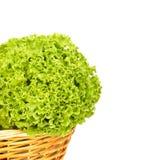 Fondo bianco di agricoltura biologica della lattuga Fotografie Stock Libere da Diritti